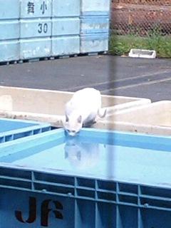 野良猫の水飲み場