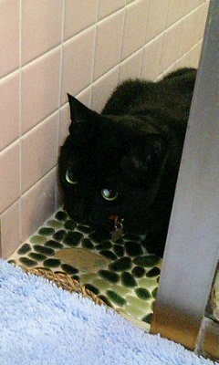風呂場は好きな猫