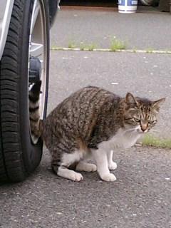 めしーめしーと鳴く猫かな