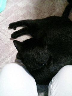 甘える猫(と思いたい)