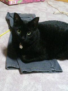 猫用ジーンズ座布団
