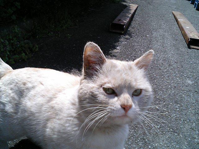 ベージュ猫居着いたらしい