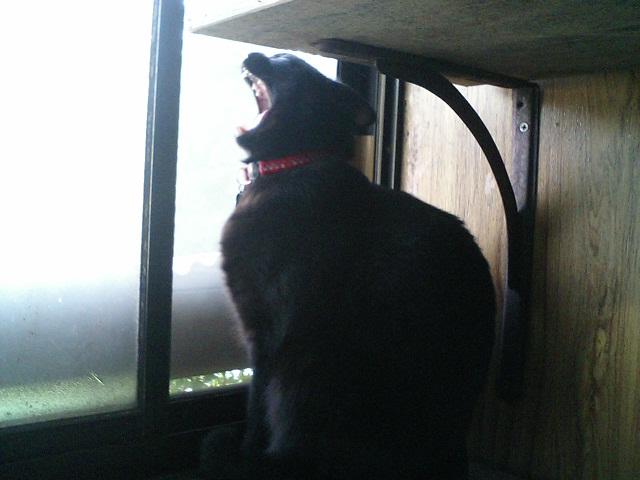 猫飼い防猫グッズを使う